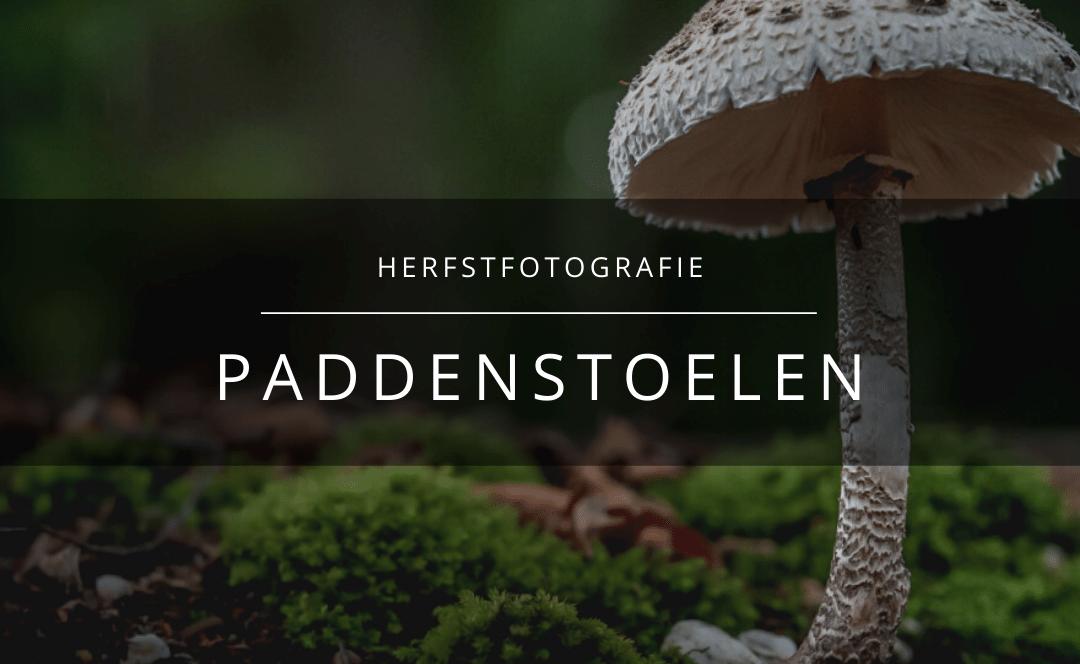 Herfstfotografie – paddenstoelen