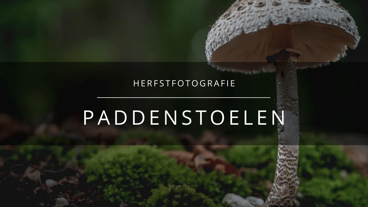 Arnhemsmeiske paddenstoelen fotograferen