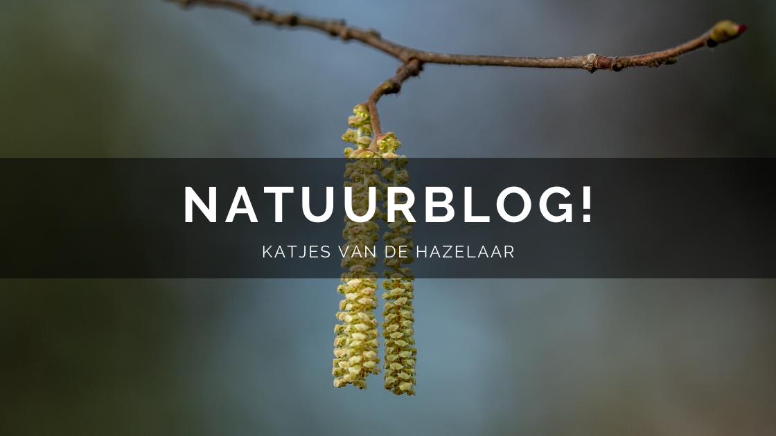 Arnhemsmeiske natuurblog katjes hazelaar