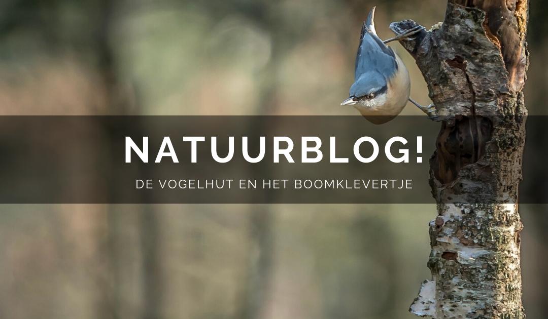 Natuurblog: De vogelhut en het boomklevertje