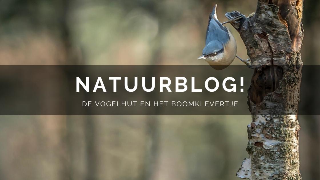 Arnhemsmeiske natuurblog boomklevertje