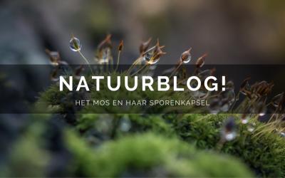 Natuurblog: Het mos en haar sporenkapsel