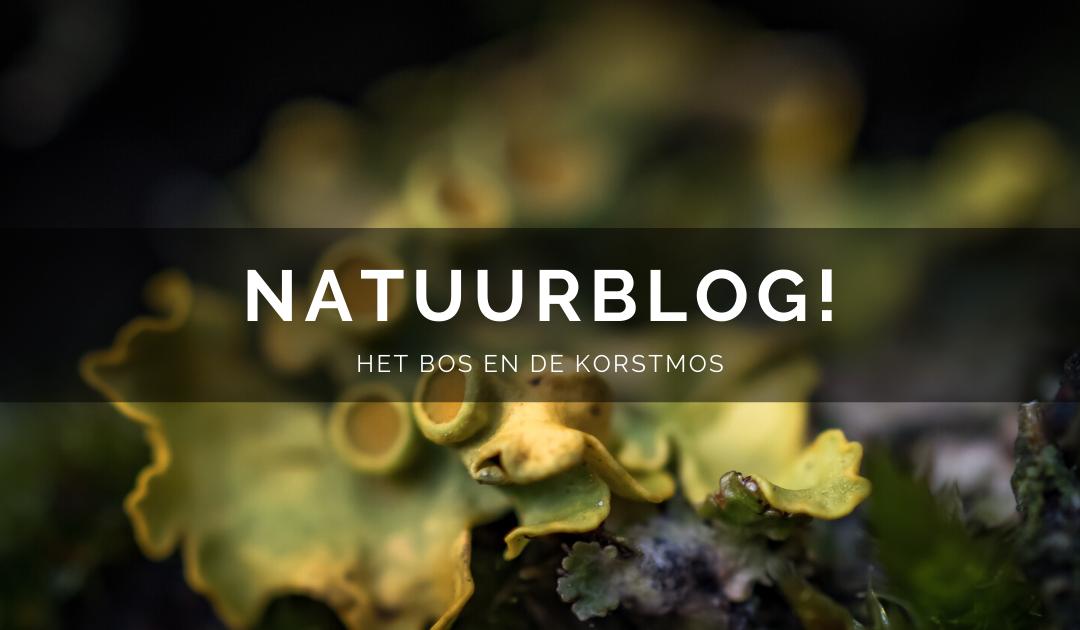 Natuurblog: Het bos en de korstmos