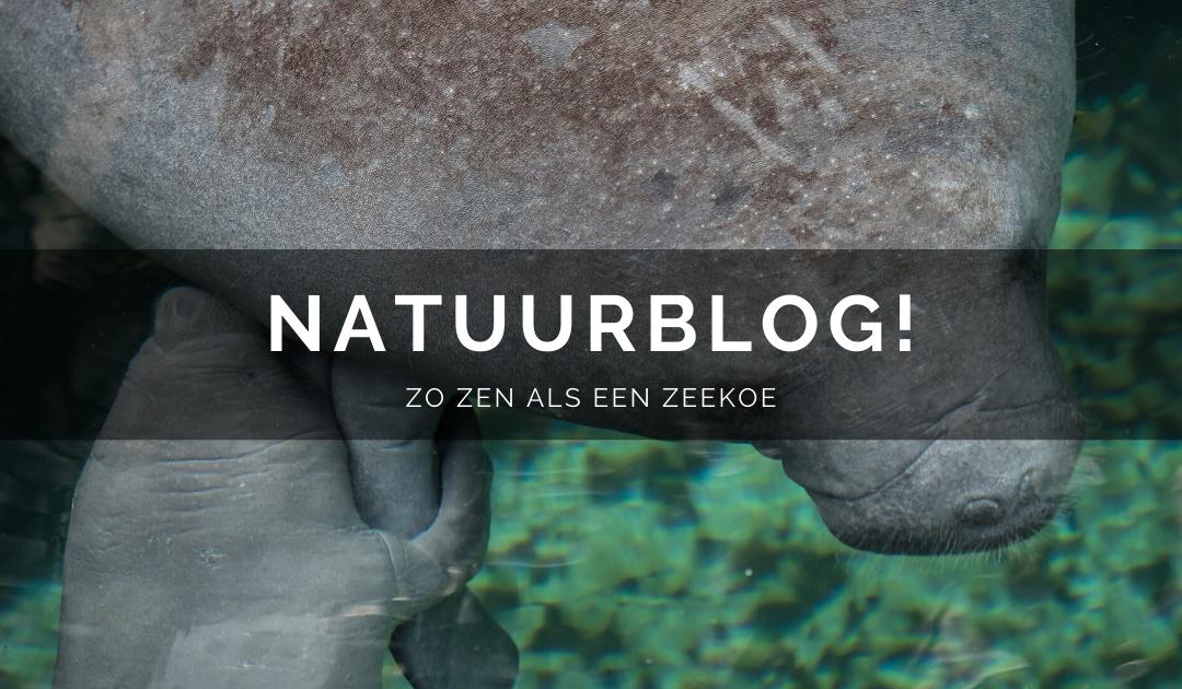 Natuurblog: Zo zen als een zeekoe