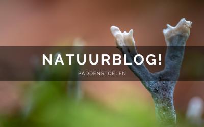 Natuurblog: paddenstoelen