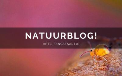Natuurblog: het springstaartje