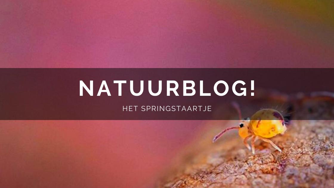 Arnhemsmeiske natuurblog het springstaartje