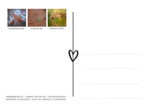 Ansichtkaarten | Tussen de herfstblaadjes | 1 | achterkant