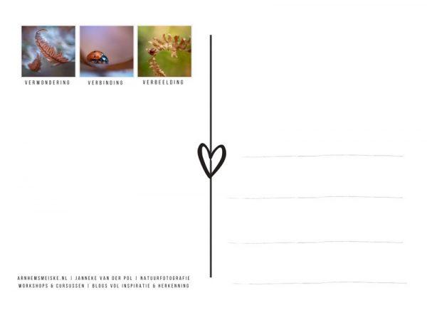 Ansichtkaarten | Tussen de herfstblaadjes | 2 | achterkant