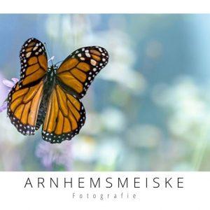 Ansichtkaarten | Vliegende vlinders | 1