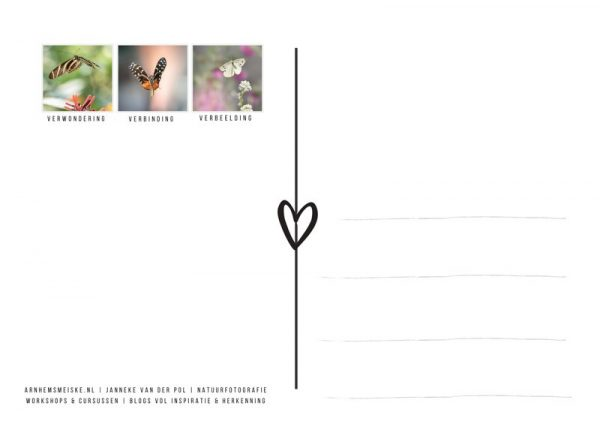 Ansichtkaarten | Vliegende vlinders | 1 | achterkant