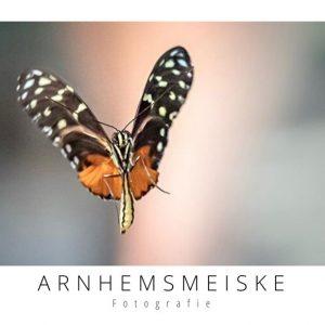 Ansichtkaarten | Vliegende vlinders | 2