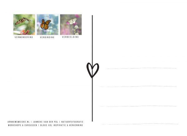 Ansichtkaarten | Vliegende vlinders | 2 | achterkant