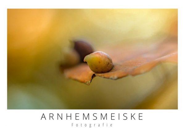 Ansichtkaart | herfst | 1