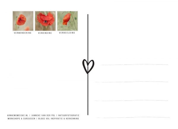 Ansichtkaarten | Klaprozen | 1 | achterkant