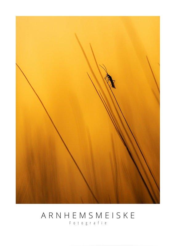 Ansichtkaarten | Insect bij avondlicht | 3