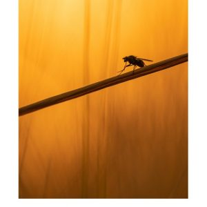 Ansichtkaarten | Insect bij avondlicht | 4