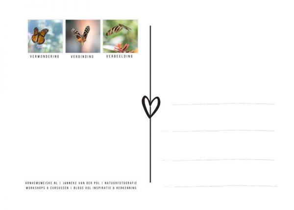 Ansichtkaarten | Vliegende vlinders | 3 | achterkant