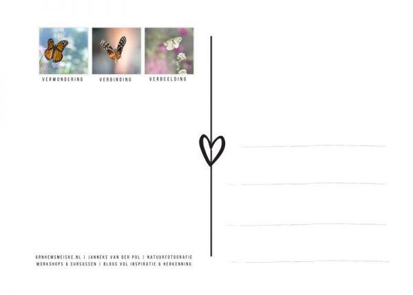 Ansichtkaarten | Vliegende vlinders | 4 | achterkant