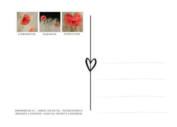 Ansichtkaarten | Klaprozen | 3 | achterkant