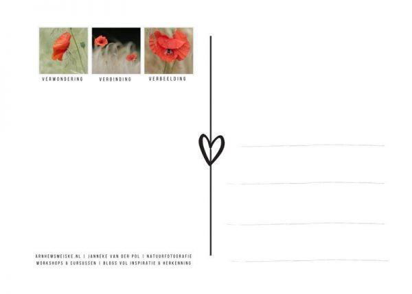Ansichtkaarten | Klaprozen | 4 | achterkant