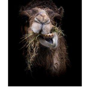 Ansichtkaarten | LowKey dierenportret | 1