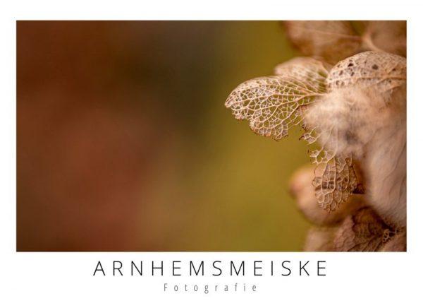 Ansichtkaart | herfst | 2