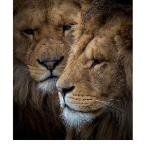 Ansichtkaarten | LowKey dierenportret | 2
