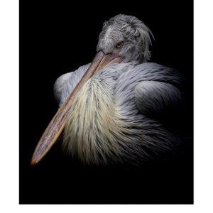 Ansichtkaarten | LowKey dierenportret | 3