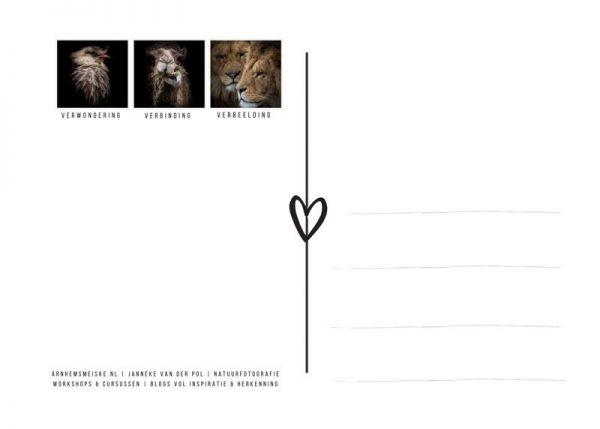 Ansichtkaarten | LowKey dierenportret | 3 | achterkant