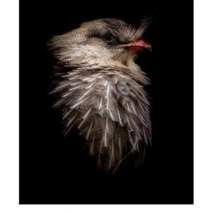 Ansichtkaarten | LowKey dierenportret | 4