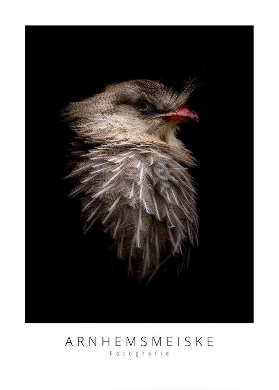 Ansichtkaarten   LowKey dierenportret   4