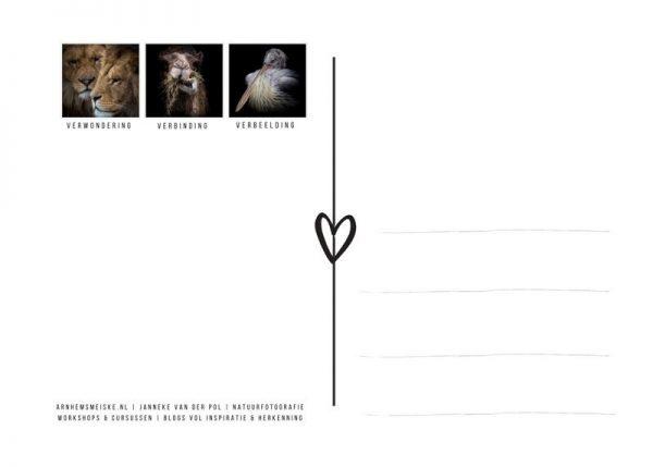 Ansichtkaarten   LowKey dierenportret   4   achterkant