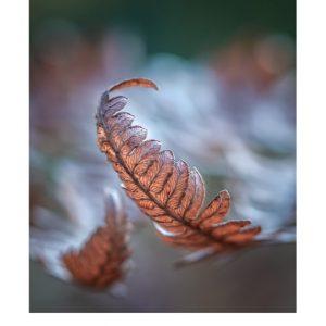 Ansichtkaarten | Tussen de herfstblaadjes | 4