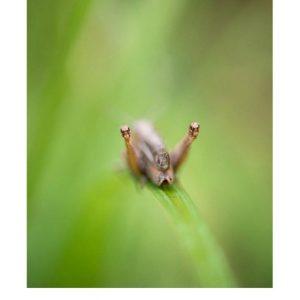 Ansichtkaart | krekeltjes & sprinkhanen | 4