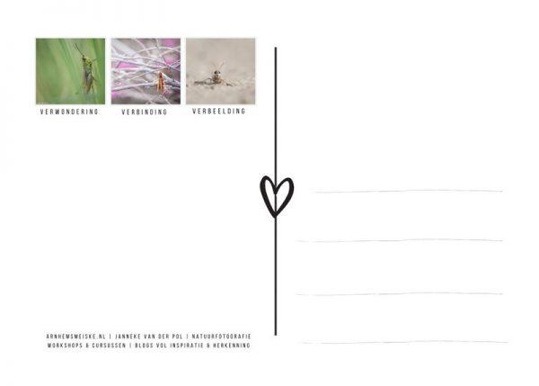Ansichtkaart | krekeltjes & sprinkhanen | 4 | achterkant