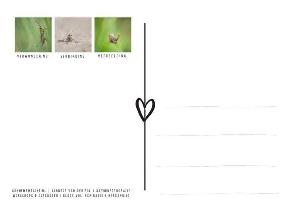 Ansichtkaart | krekeltjes & sprinkhanen | 1 | achterkant