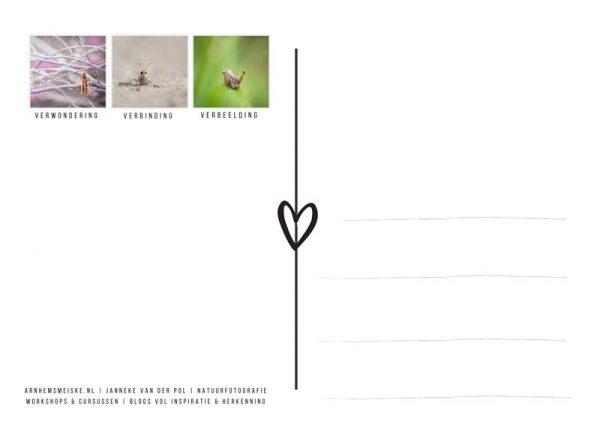 Ansichtkaart | krekeltjes & sprinkhanen | 2 | achterkant