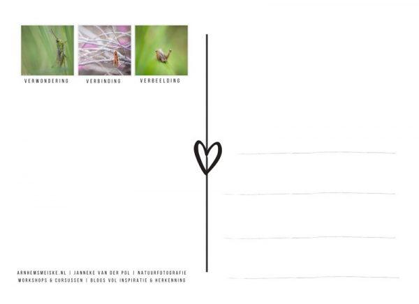 Ansichtkaart | krekeltjes & sprinkhanen | 3 | achterkant