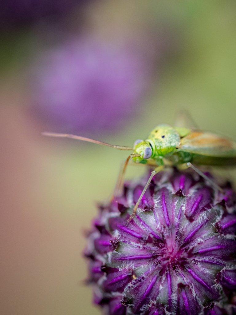 vlinders Arnhemsmeiske Natuurfotografie