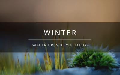 Winter: saai en grijs of vol kleur?