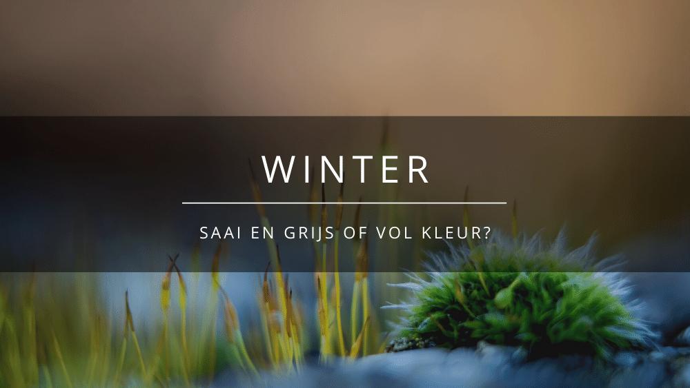 AM blog Winter