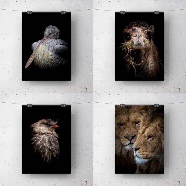 Alle ansichtkaarten in het thema LowKey dierenportretten in één setje!