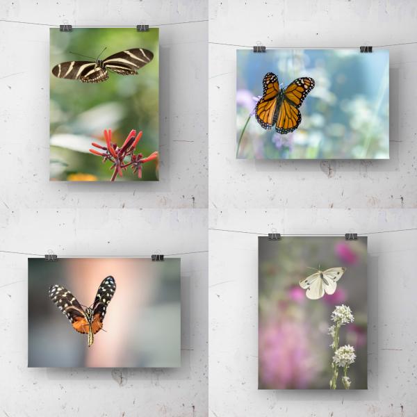 Vliegende vlinders Arnhemsmeiske