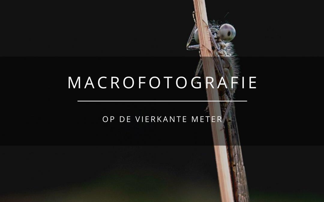 macrofotografie OP DE VIERKANTE METER