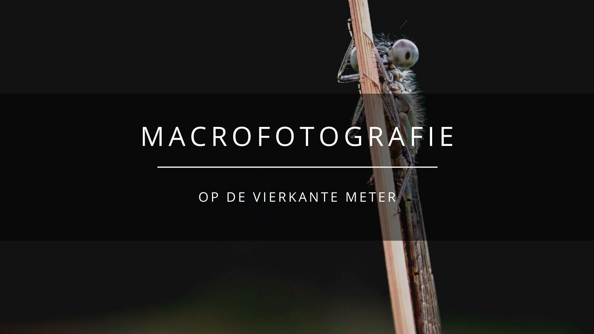AM macrofotografie op de vierkante meter