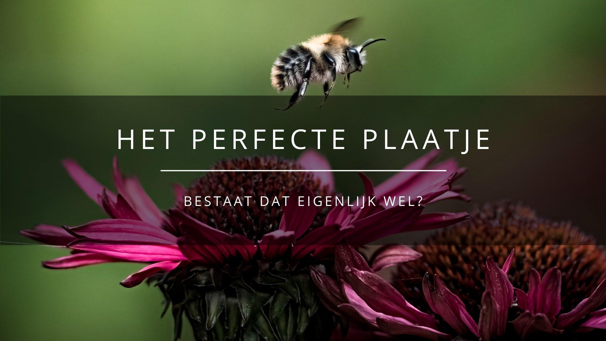 https://arnhemsmeiske.nl/lege-ruimte/